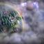 Скриншот из игры Эадор: Владыки миров